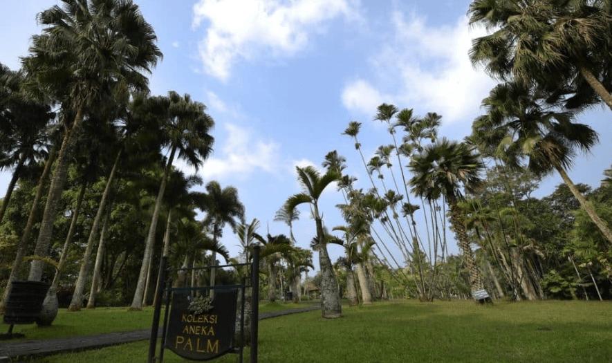 aneka koleksi palm taman bunga