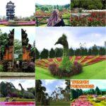 keindahan wisata taman bunga nusanatara