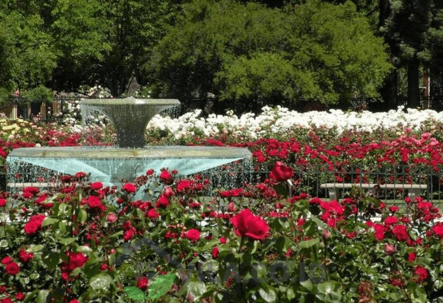 taman mawar di taman bunga nusatara